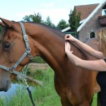 Bomers Paarden Dry Needlng Triggerpoints