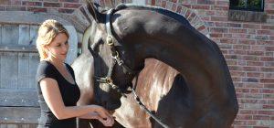Bomers Paarden Dry Needling behandeling inbuigen